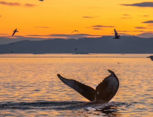 Baleia à vista em Ilhabela